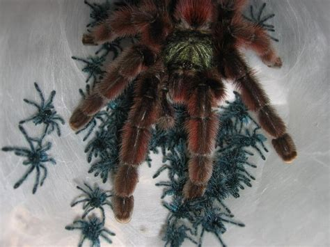 THE TARANTULA KEEPER'S GUIDE: ON THE HORIZON