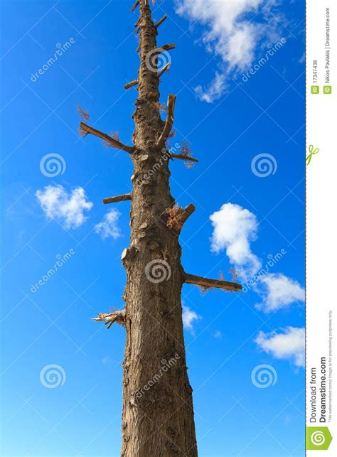 Tree with no branches stock photo